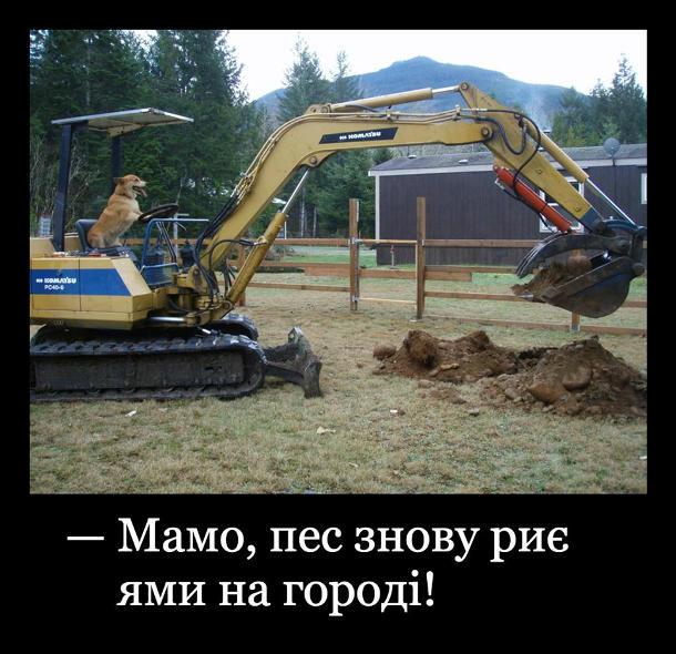 - Мамо, пес знову риє ями на городі!. Пес за кермом екскаватора