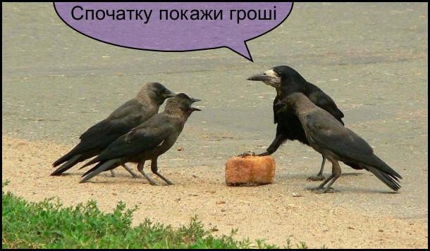 Стоять три круки (ворони), а інший, більший крук (іншого виду) тримає одну лапу на шматку хліба і каже: - Спочатку покажи гроші