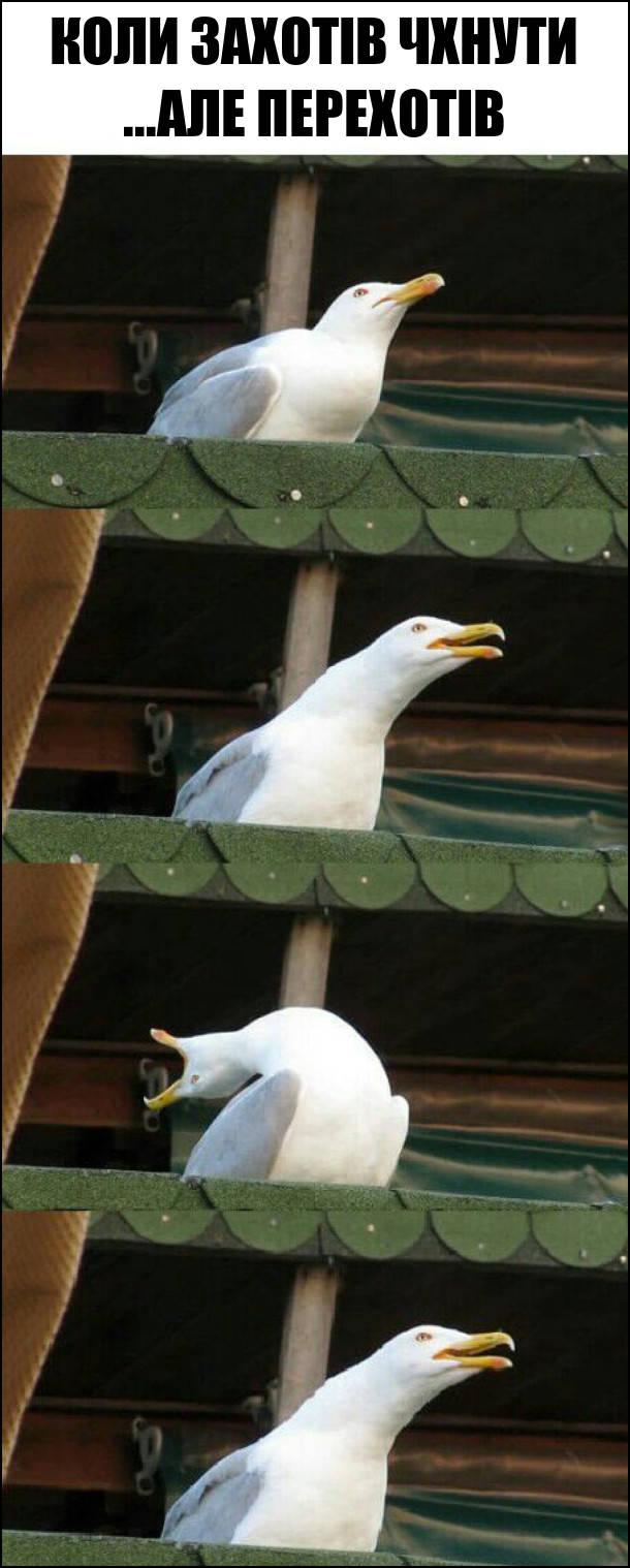 Коли захотів чхнути ...але перехотів. Мем з чайкою. Чайка закинула голову назад, неначе хоче чхнути, а потім повернулась у вихідне положення
