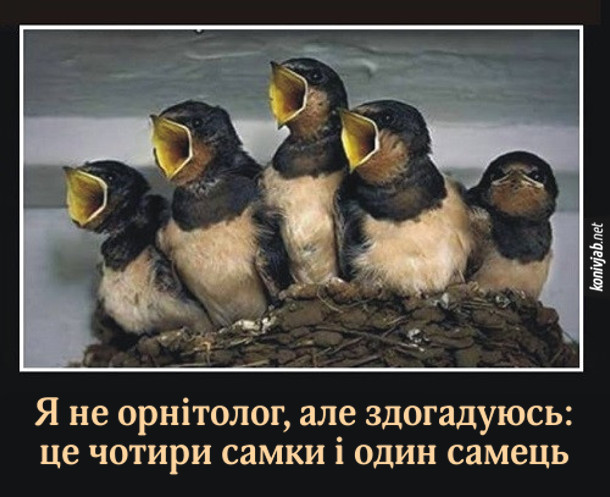 Як визначити стать пташки. На фото п'ять пташок - четверо з відкритими дзьобиками і одна з закритим. Я не орнітолог, але здогадуюсь: це чотири самки і один самець