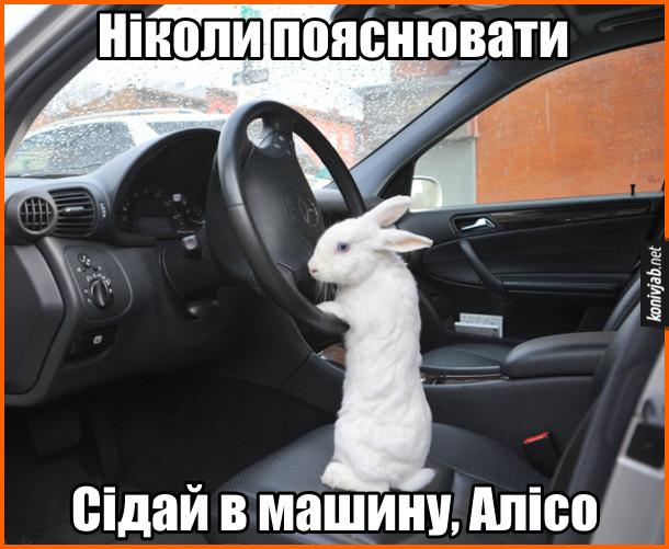 Прямуй за білим кроликом. В машині за кермом сидить білий кролик: Ніколи пояснювати. Сідай в машину, Алісо