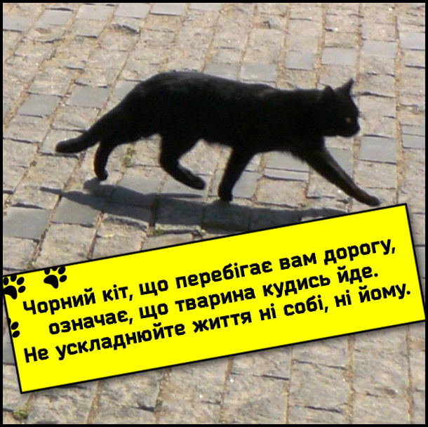 Жарт, анекдот про чорного кота. Чорний кіт, що перебігає вам дорогу, означає, що тварина кудись йде. Не ускладнюйте життя ні собі, ні йому.