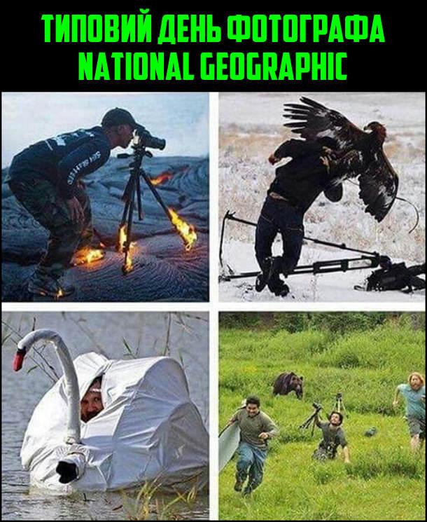 Типовий день фотографа National Geographic: фотографує на вулкані, коли вже горить штатив; нападає орел; маскується під лебедя; тікає від ведмедя