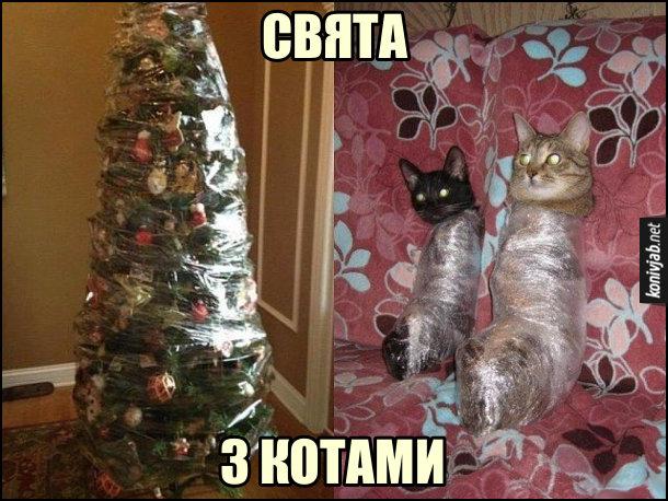 Свята з котами. Різдвяна, новорічна ялинка і коти. Як зробити, щоб коти не звалили ялинку. Ялинку обмотати плівкою, і котів обмотати плівкою