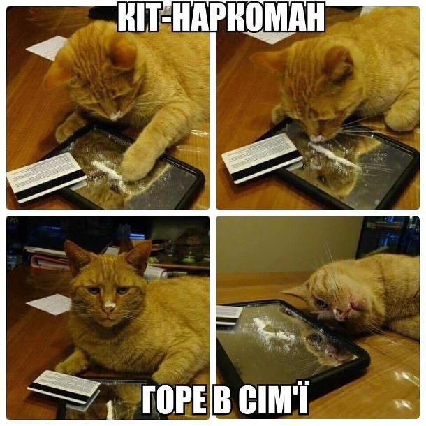 Кіт-наркоман - горе в сім'ї