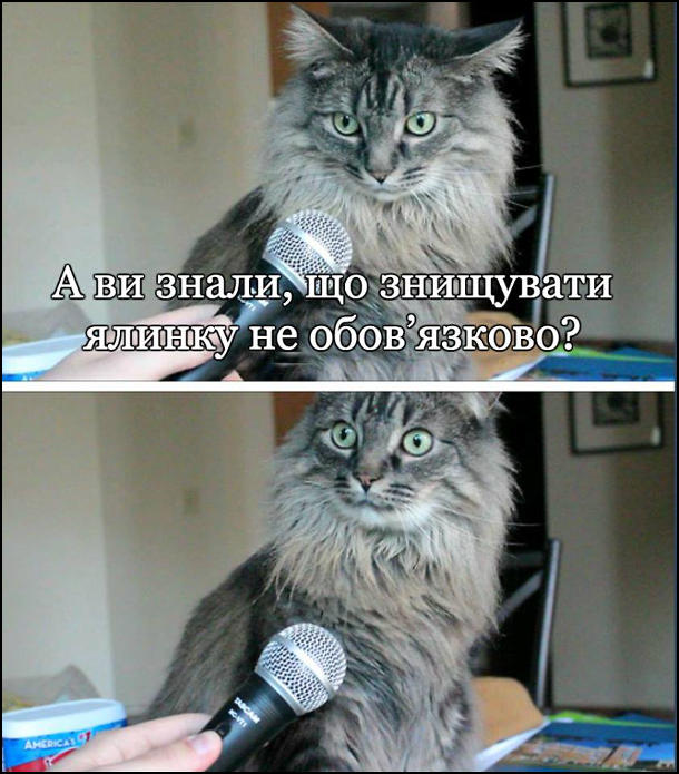 Жарт про кота. Беруть інтерв'ю в кота: - А ви знали, що знищувати ялинку не обов'язково? Кіт здивовано витріщився