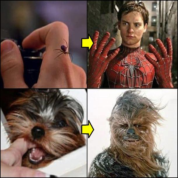 Мем. Вкусив павук - став людиною-павуком (Спайдерменом); вкусив песик - став Чубаккою (із Зоряних воєн)