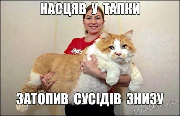 Насцяв у тапки - затопив кота знизу. Жінка тримає на руках величезного кота