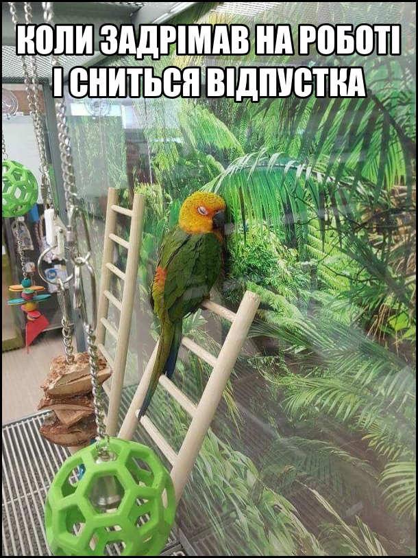 Коли задрімав на роботі сниться відпустка. Смішна фотка з папугою: Папуга спить, притулившись до стіни із зображенням джунглів