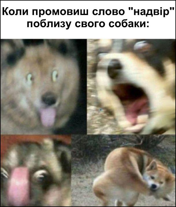 """Коли промовиш слово """"надвір"""" поблизу свого собаки: він починає казитися від радості"""
