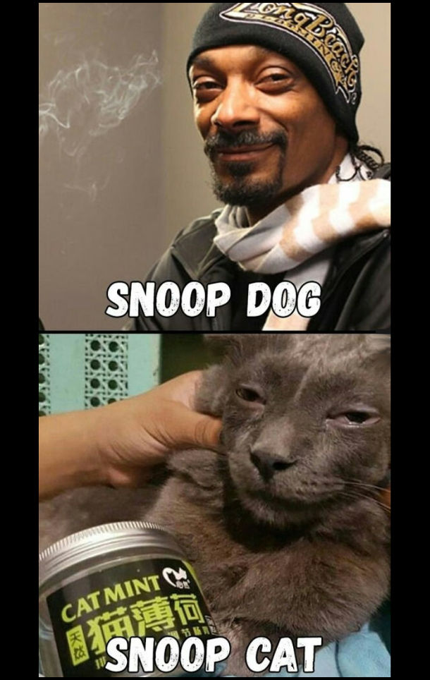 Snoop Dog (Снуп Доґ) і Snoop Cat (кіт, схожий на Снуп Доґа)