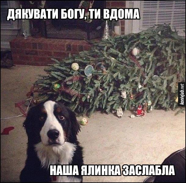 Коли повернувся додому, побачив, що собака звалив ялинку. Пес: - Дякувати Богу, ти вдома. Наша ялинка заслабла