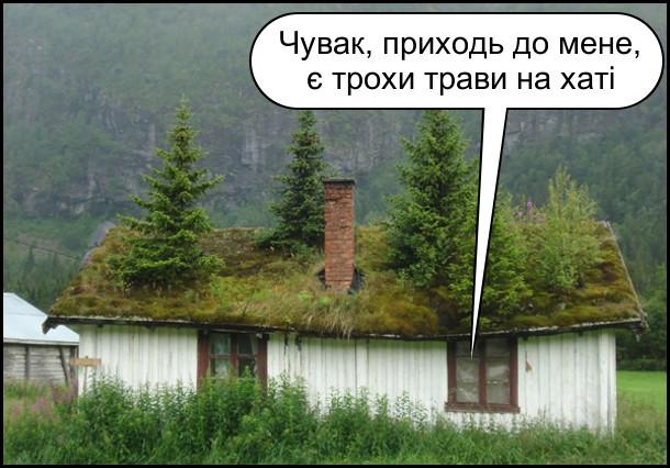 Скандинавський будинок в горах, в якого на покрівлі росте трава і дерева. З будинку лунає: - Чувак, приходь до мене, є трохи трави на хаті
