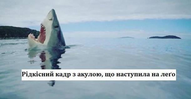 Рідкісний кадр з акулою, що наступила на лего