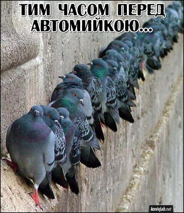 Мем про голубів. Тим часом перед автомийкою... На стіні сидять голуби в ряд і дивляться донизу, мабуть чекають, доки з мийки виїде чисте авто, щоб його обісрати