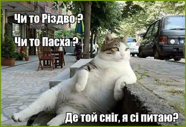Що за зима? Мем про зимову погоду. Мем про кота. Кіт сидить на вулиці і роздратовано думає: Чи то Різдво? Чи то Пасха? Де той сніг, я сі питаю?