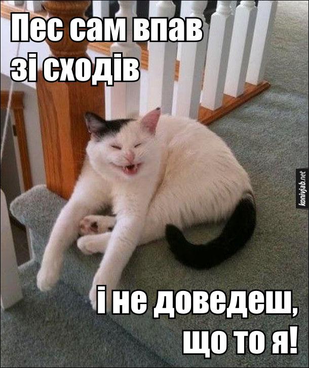 Кіт зіштовхнув собаку і єхидно росміхається, сидяси на верхніх східцях. - Пес сам впав зі сходів, і не доведеш, що то я