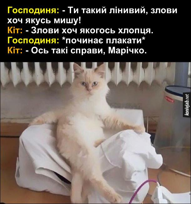 Прикол про кота. Кіт сидить біля батареї, заклавши лапу на лапу. Господиня: - Ти такий лінивий, злови хоч якусь мишу! Кіт: - Злови хоч якогось хлопця. Господиня: *починає плакати* Кіт: - Ось такі справи, Марічко.