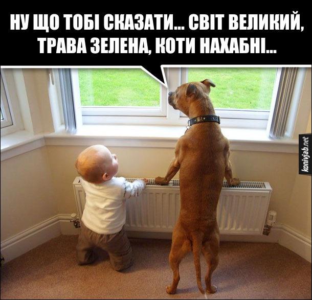 Смішне фото дитина і собака біля вікна. Пес: - Ну що тобі сказати... світ великий, трава зелена, коти нахабні
