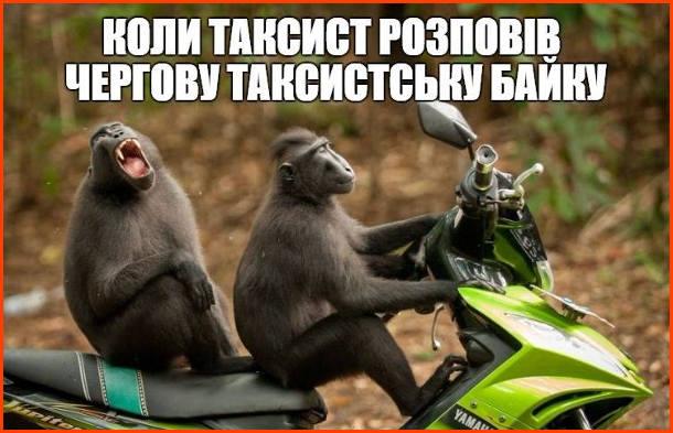 Прикол, мем про таксиста. Коли таксист розповів чергову таксистську байку. Дві мавпи на скутері, одна за кермом, інша - відкрила пащу, неначе сміється