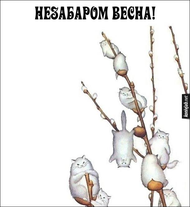 Весняні коти. Незабаром весна - на деревах на гілках сидять білі коти, неначе бруньки