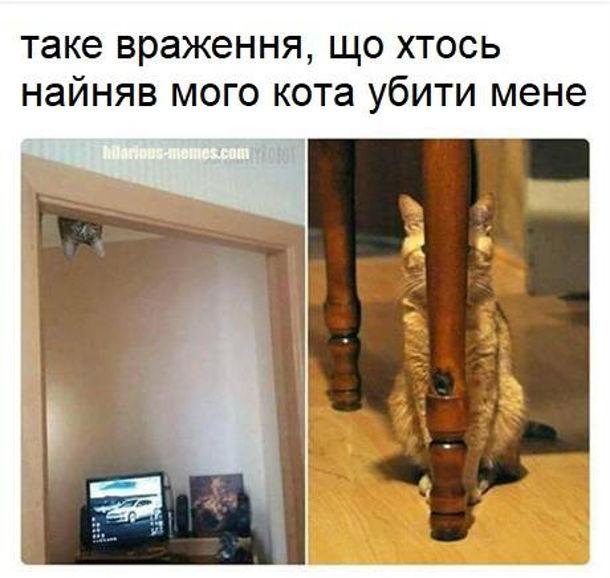 Кіт ховається. Таке враження, що хтось найняв мого кота убити мене. Кіт стежить то над дверима, то сховавшись за ніжкою стільця