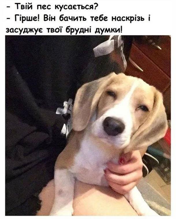 Серйозний пес дивиться на тебе примруженими очима. - Твій пес кусається? - Гірше! Він бачить тебе наскрізьі засуджує твої брудні думки!