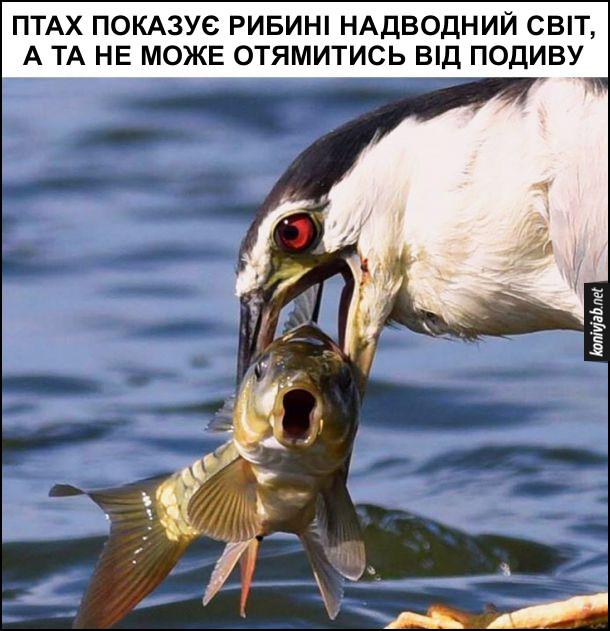 Птах зловив рибину. Птах показує рибині надводний світ, а та не може отямитись від подиву