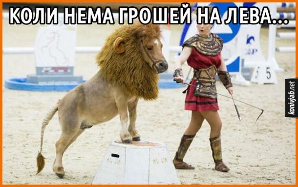 Прикол про цирк. Коли нема грошей на лева... На арені цирку поні з лев'ячою гривою