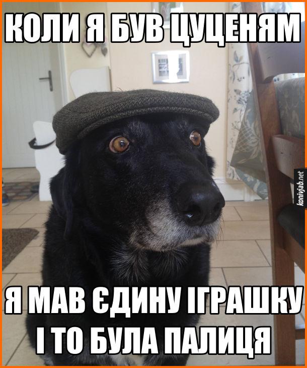 Собака в кепці. Коли я був цуценям, я мав єдину іграшку, і то була палиця