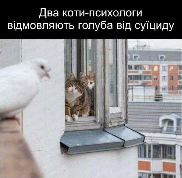 Коти і голуб. Два коти-психологи відмовляють голуба від суїциду. Коти сидять на підвіконні і уважно дивляться на голуба