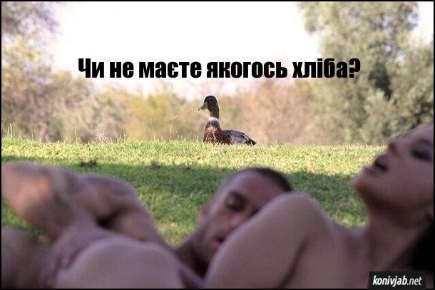 Прикол секс на природі. До коханців підходить качка: - Чи не маєте якогось хліба?