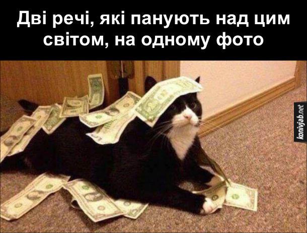 Смішне фото з котом. Дві речі, які панують над цим світом, на одному фото. Кіт і гроші (долари)
