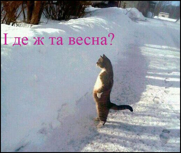 Жарт про холодну весну. Кіт біля кучугури снігу стоїть на задніх лапах і промовляє: - І де ж та весна?