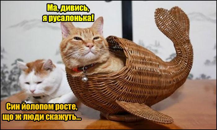 Кіт в кошику. Кіт заліз в плетену корзину в формі риб'ячого хвоста і каже: - Ма, дивись, я русалонька! Кицька: - Син йолопом росте, що ж люди скажуть...