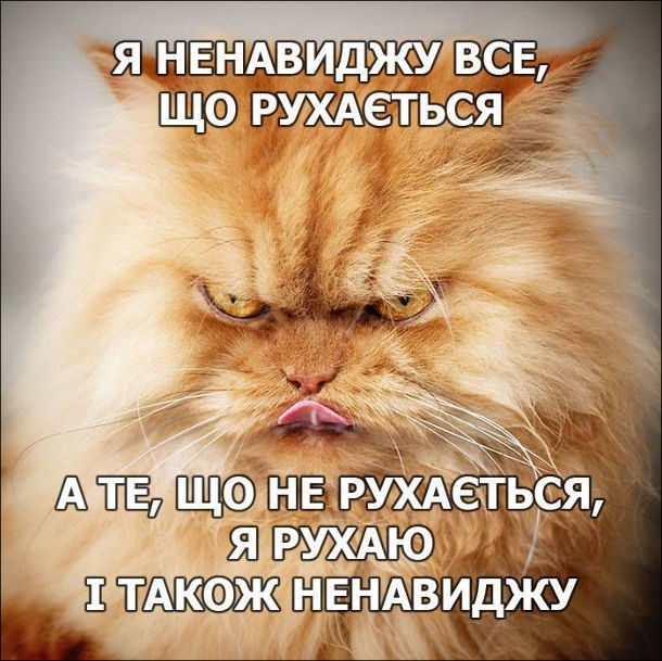 Злий кіт. Я ненавиджу все, що рухається. А те, що не рухається, я рухаю і також ненавиджу
