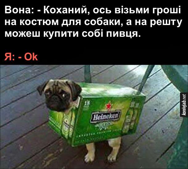 Смішне фото. Одяг для собаки. Вона: - Коханий, ось візьми гроші на костюм для собаки, а на решту можеш купити собі пивця. Я: - Ok. Купив собі блок пива, а коробку з-під пива одягнув на собаку мопса