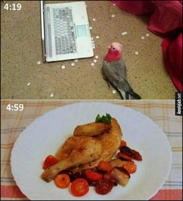Жарт про папугу. Папуга виклював клавіші на ноутбуці - приготував з папуги страву