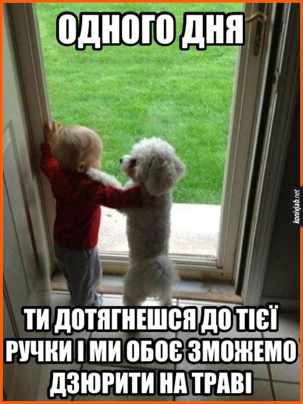 Жарт про дитину і собаку. Малюк з песиком стоять біля скляних вхідних дверей і дивляться крізь них надвір. Пес: -Одного дня ти дотягнешся до тієї ручки і ми обоє зможемо дзюрити на траві