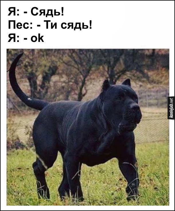 Жарт про великого собаку і його дресирування. Я: - Сядь! Великий чорний пес: - Ти сядь! Я: - ok