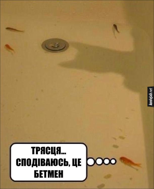 Кіт і рибки. У ванній плавають рибки. Тут з'явилася тінь котячої голови. Одна дівчина перелякано подумала: - Трясця... Сподіваюсь, це Бетмен