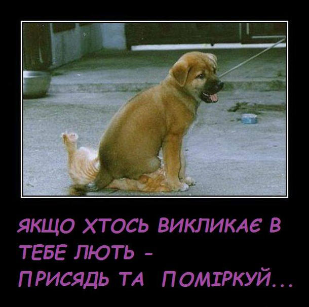 Кіт і собака Смішне фото. Песик сидить на котові. Якщо хтось викликає в тебе лють - присядь та поміркуй...