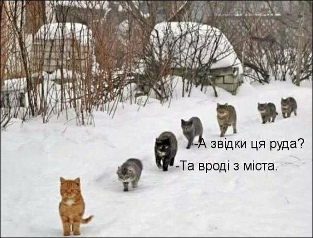 Прикол Кицька і коти. Йде руда кицька а за нею вервечкою йде шестеро котів. Один питає: - А звідки ця руда? Інший: - Та вроді з міста