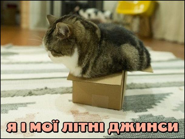Смішна фотка: Кіт в маленькій коробці. Це ніби я і мої літні джинси