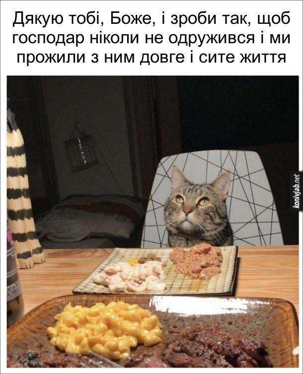 Смішне фото: Кіт і холостяк. Кіт сидить за столом перед господарем, перед ним тарілка з м'ясним фаршем. Кіт: - Дякую тобі, Боже, і зроби так, щоб господар ніколи не одружився і ми прожили з ним довге і сите життя
