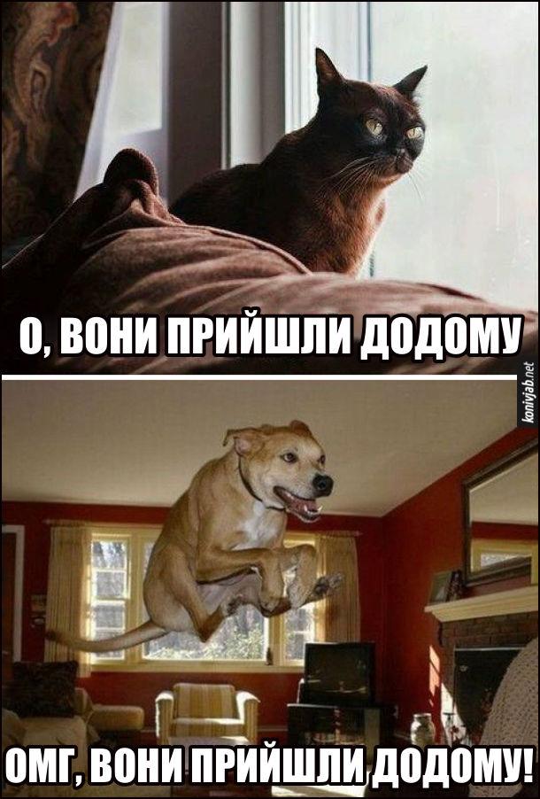 Як зустрічають господарів, коли ті повернулись додому. Кіт, спокійно: - О, вони прийшли додому. Пес, в неймовірному стрибку: - Омг, вони прийшли додому!