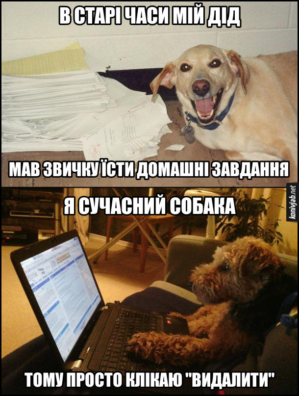 """Прикол Собака з'їв домашнє завдання (домашку). Песик: - В старі часи мій дід мав звичку їсти домашні завдання. Я сучасний собака, тому просто клікаю """"видалити"""". Пес сидить за ноутбуком."""