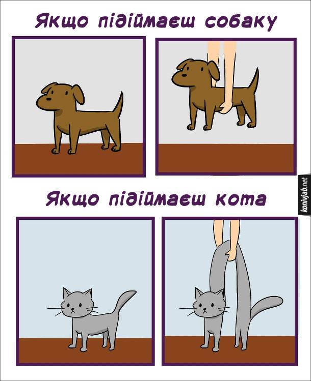 Смішний малюнок про собаку і кота. Різниця поведінкою собаки і кота. Якщо підіймаєш собаку - все просто. Якщо підіймаєш кота - кіт вигинається дугою