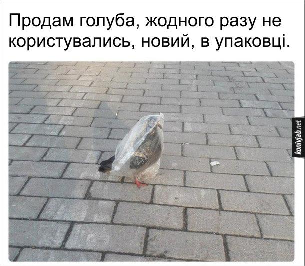 Смішне фото про голуба, що ходить з пакетом на голові. Оголошення: Продам голуба, жодного разу не користувались, новий, в упаковці.
