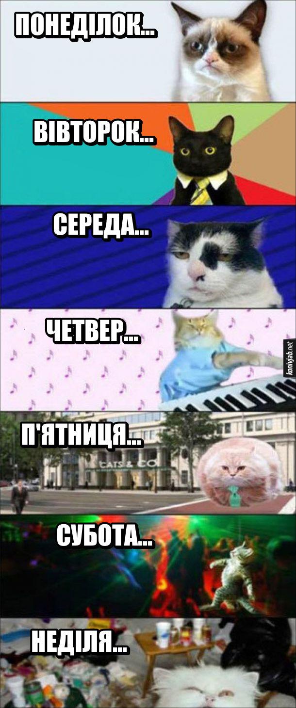 Тиждень з котиками. Кжен жень тижня відповідає іншому котику, від злого в понеділок до п'яного в неділю